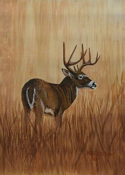 """Grasslands Buck"" 12""x17"" Acrylic on canvas"